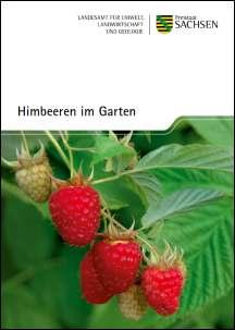 Himbeeren Im Garten