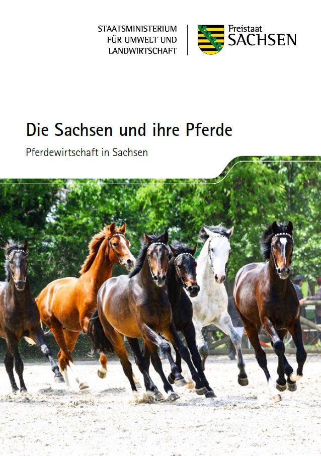 sachsens pferde